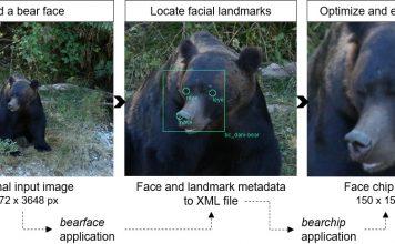 Esempio dal progetto BearID